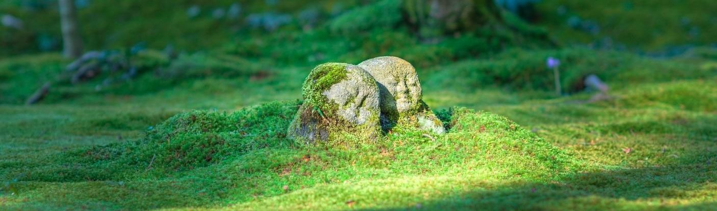 Mossy ground with rock